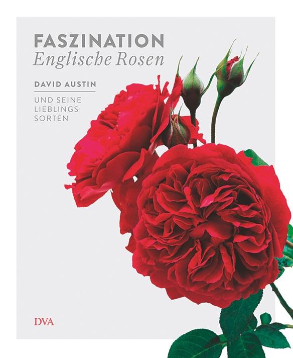david austin faszination englische rosen. Black Bedroom Furniture Sets. Home Design Ideas